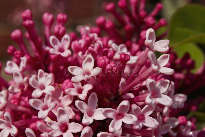 Älskvärda lila blommor royaltyfri foto