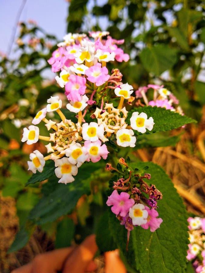 Älskvärt se för färgglade blommor arkivbilder