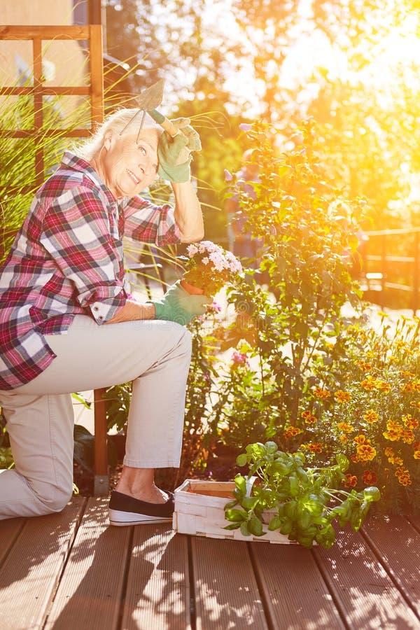 Älter an der Gartenarbeit im Sommer stockfotografie