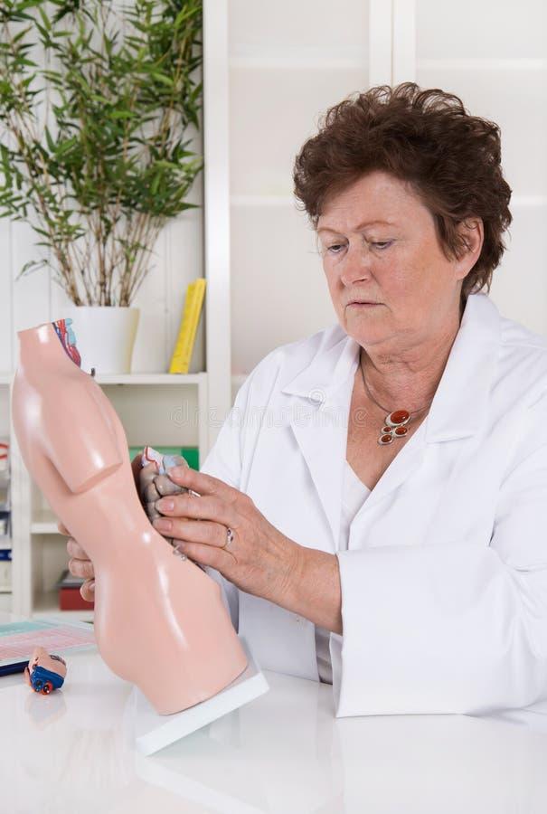 Ältere Ärztin demonstrieren und erklären den menschlichen Körper lizenzfreies stockfoto