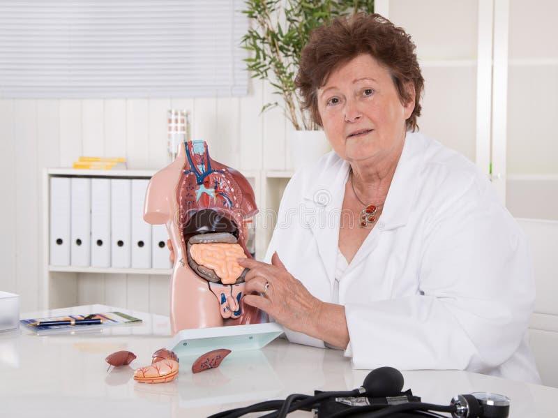 Ältere Ärztin, die den menschlichen Körper mit dem Torso erklärt stockfotografie