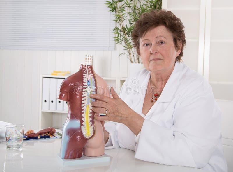 Ältere Ärztin, die den menschlichen Körper mit dem Torso erklärt stockbild