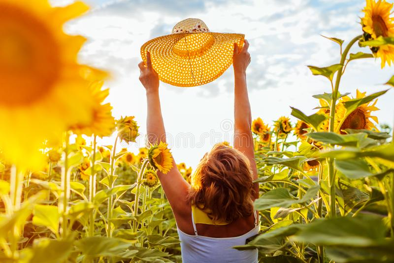 Ältere Frau, die in blühenden Sonnenblumenfeldholdinghut geht und Ansicht bewundert Krasnodar Gegend, Katya lizenzfreie stockfotografie