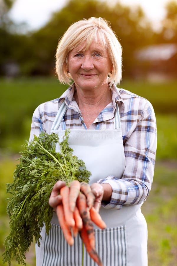 Ältere Frau, die inländische angebaute Karotten zeigt lizenzfreie stockbilder