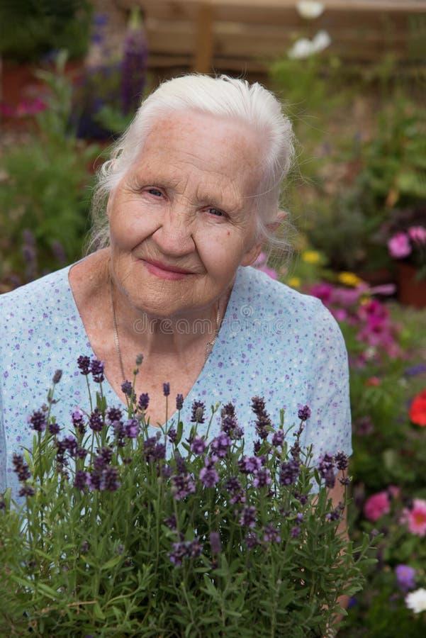 Ältere Frau, die Lavendel hält stockbild