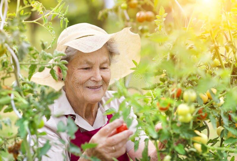 Ältere Frau in ihrem Garten lizenzfreie stockbilder