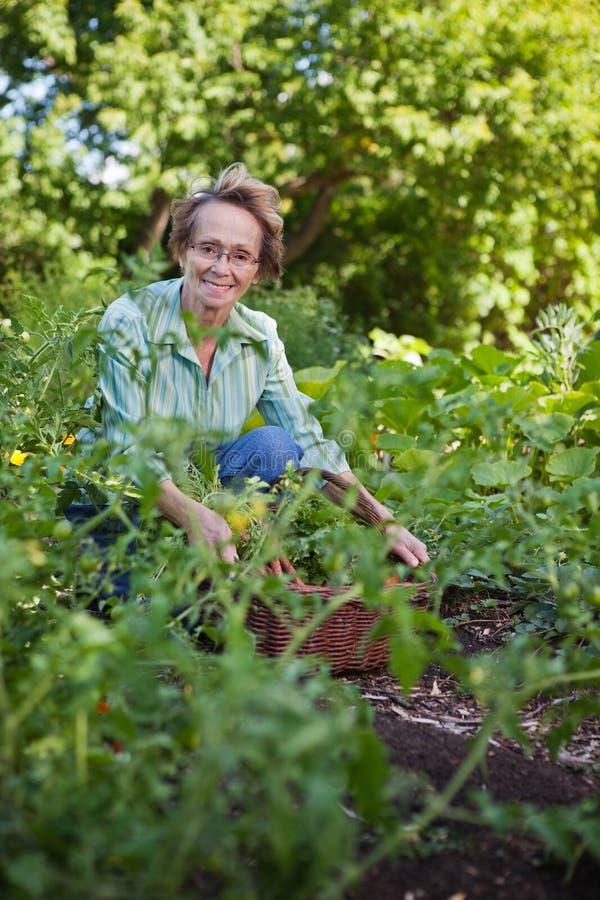 Ältere Frau im Garten lizenzfreie stockfotos