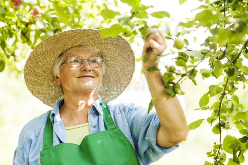 Ältere Frau im Obstgarten lizenzfreie stockfotos