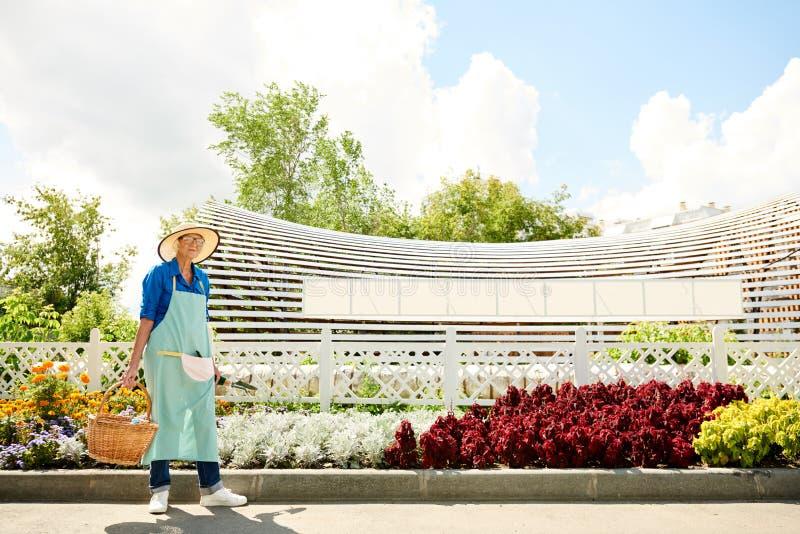 Ältere Frau im Obstgarten stockbilder