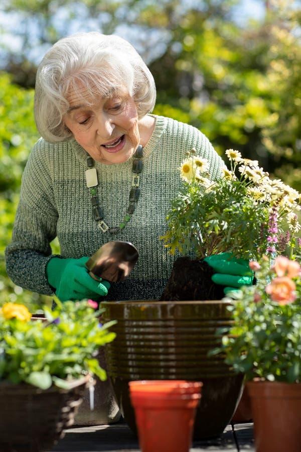 ?ltere Frau Potting-Anlage im Garten zu Hause lizenzfreie stockfotos