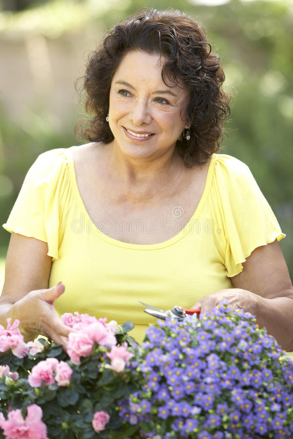Ältere Frauen-Gartenarbeit stockbild