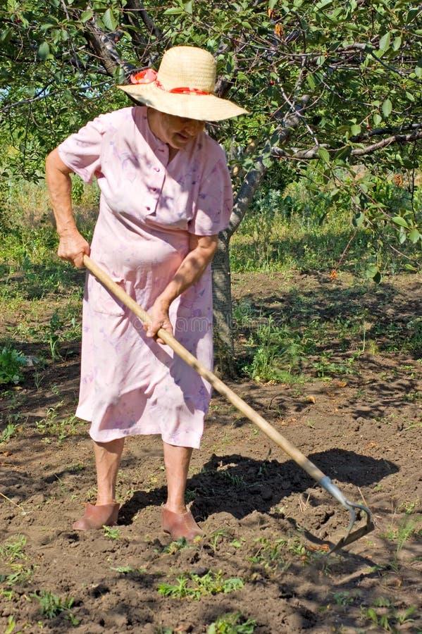 Ältere Frauengartenarbeit lizenzfreies stockbild