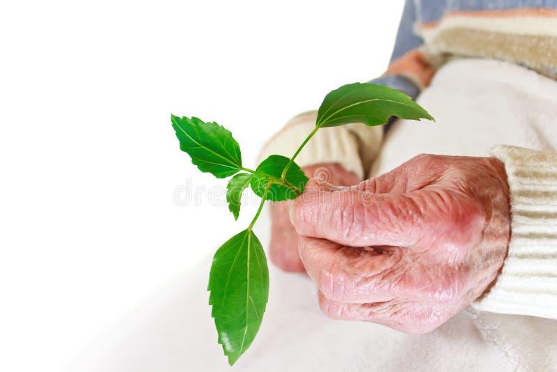 Ältere Frauenholdinganlage lizenzfreie stockbilder