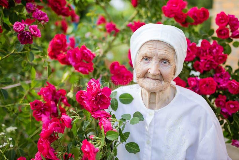 Ältere Frauenstellung an blühendem Busch von Rosen lizenzfreies stockfoto
