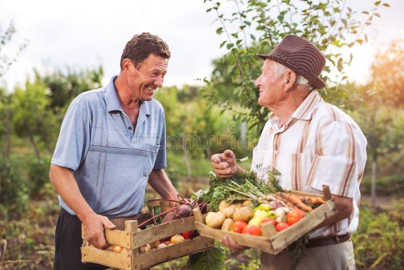 Ältere Männer mit geerntetem Gemüse lizenzfreies stockfoto