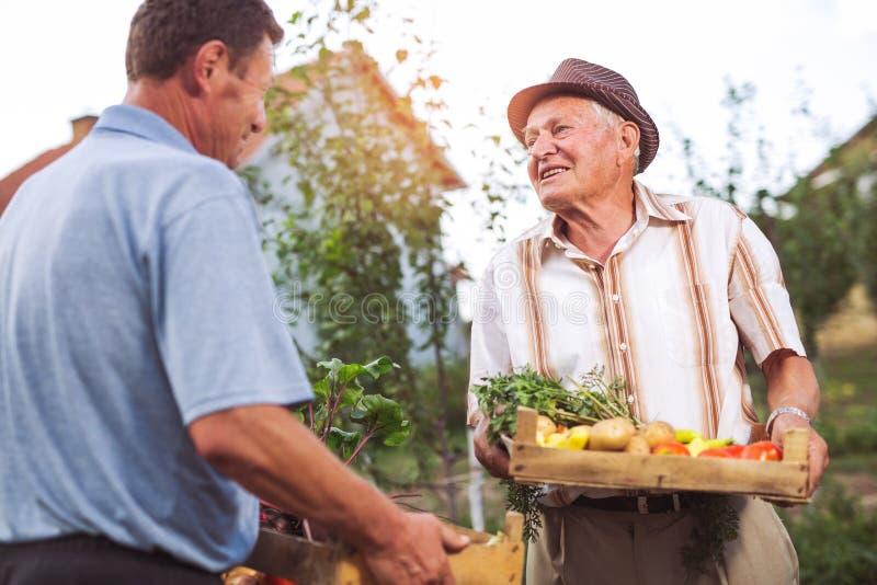 Ältere Männer mit geerntetem Gemüse lizenzfreie stockfotografie