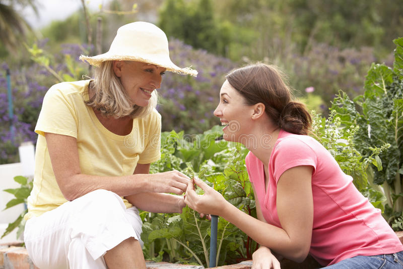Ältere Mutter-und Erwachsen-Tochter, die im Gemüsegarten arbeitet stockbilder