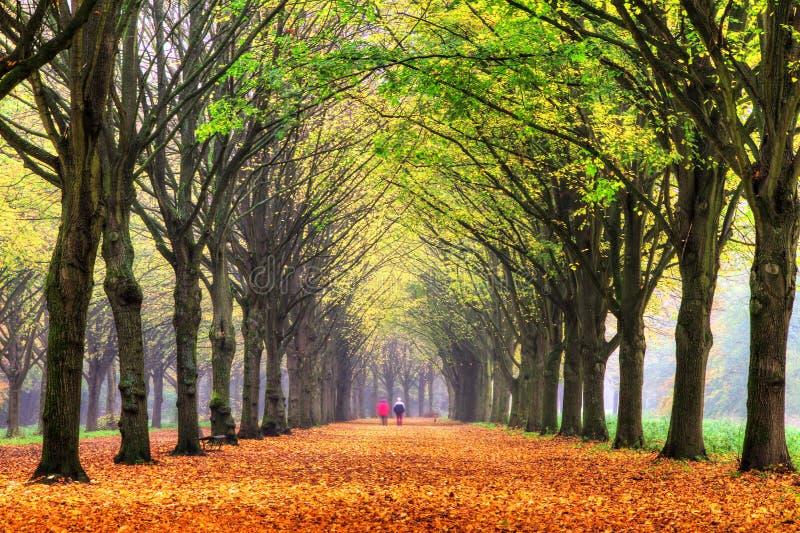 Herbstweg lizenzfreie stockbilder
