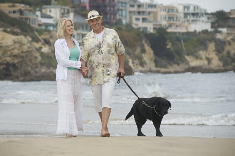 Ältere Paare, die mit Hund am Strand gehen lizenzfreie stockfotos