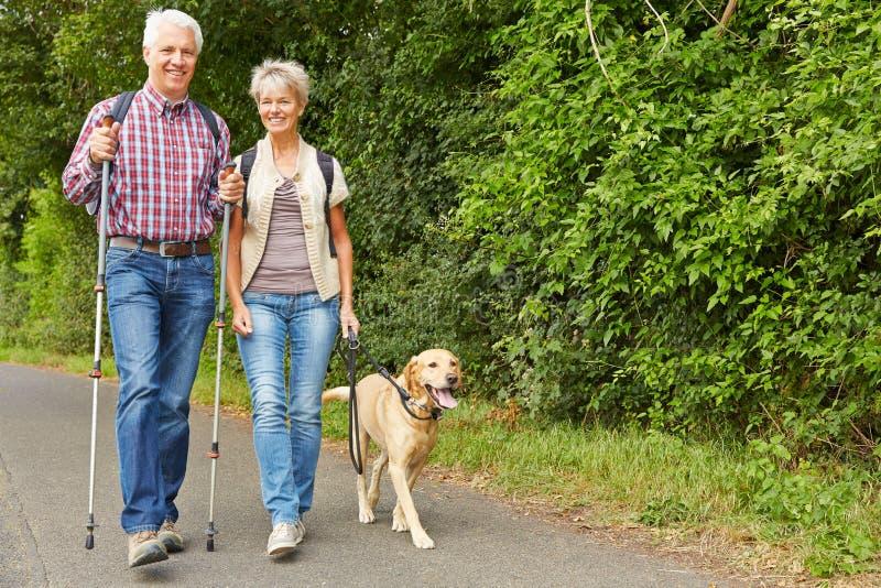 Ältere Paare, die mit labrador retriever wandern lizenzfreie stockfotografie