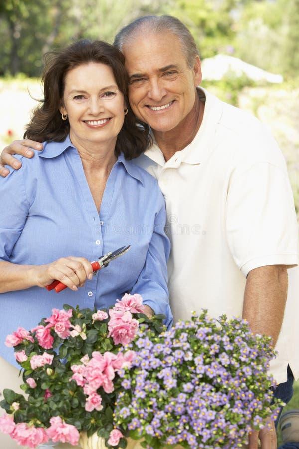 Ältere Paare, die zusammen im Garten arbeiten lizenzfreie stockfotos