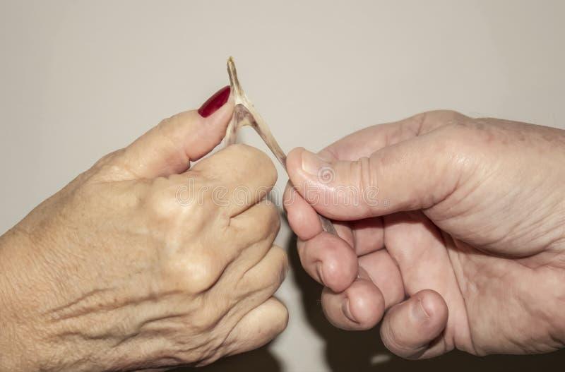 Ältere Paarhände, die einen Querlenker von einem Truthahn ziehen, um zu sehen, wem ihren Wunsch gegen einen hellen Hintergrund er stockfotos