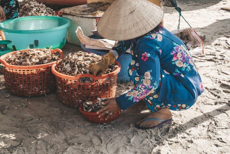 ältere vietnamesische Frauen mit sauberen Kammmuscheln der traditionellen Hüte Fischerboote auf Meer nahe Fischerdorf nah an Stad lizenzfreie stockfotografie