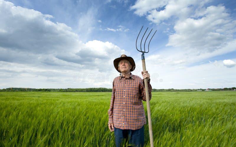 Älterer Bauer auf dem Gerstengebiet stockbild