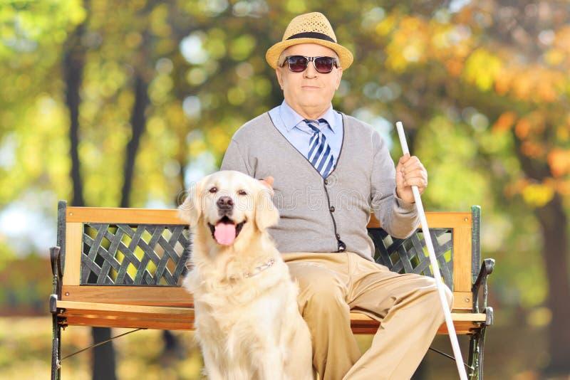 Älterer blinder Herr, der auf einer Bank mit seinem Labrador-retr sitzt stockbilder