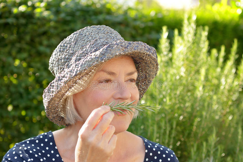Älterer Frauengarten-Rosmaringeruch lizenzfreies stockbild