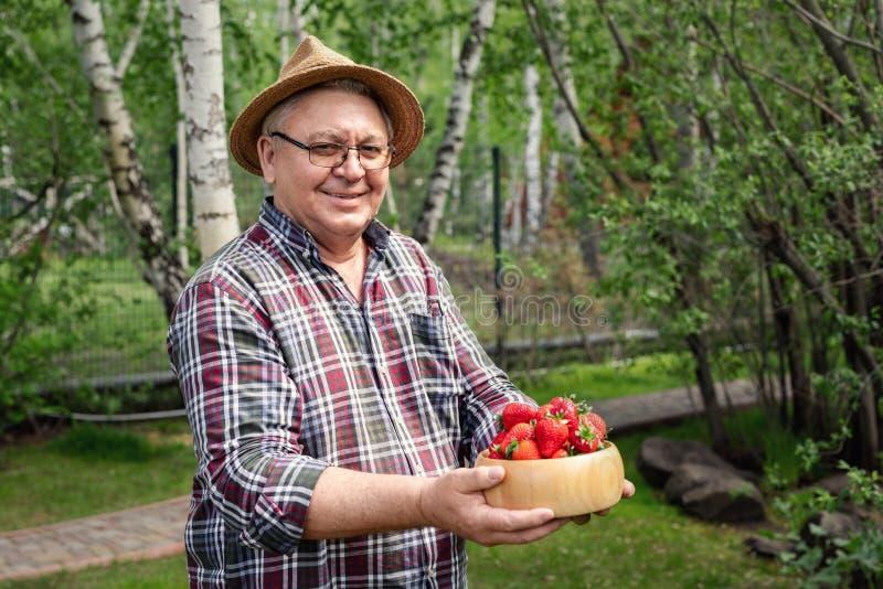 Älterer glücklicher Landwirt, der reife organische geschmackvolle Erdbeeren in der hölzernen Schüssel am Garten lächelt und hält  lizenzfreie stockfotografie