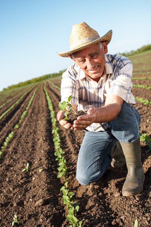 Älterer Landwirt auf einem Gebiet stockfoto