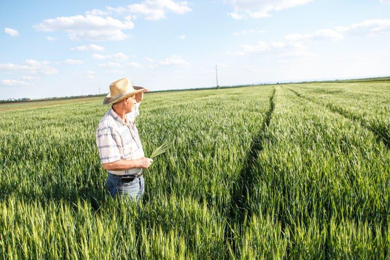 Älterer Landwirt auf einem Gebiet stockbilder