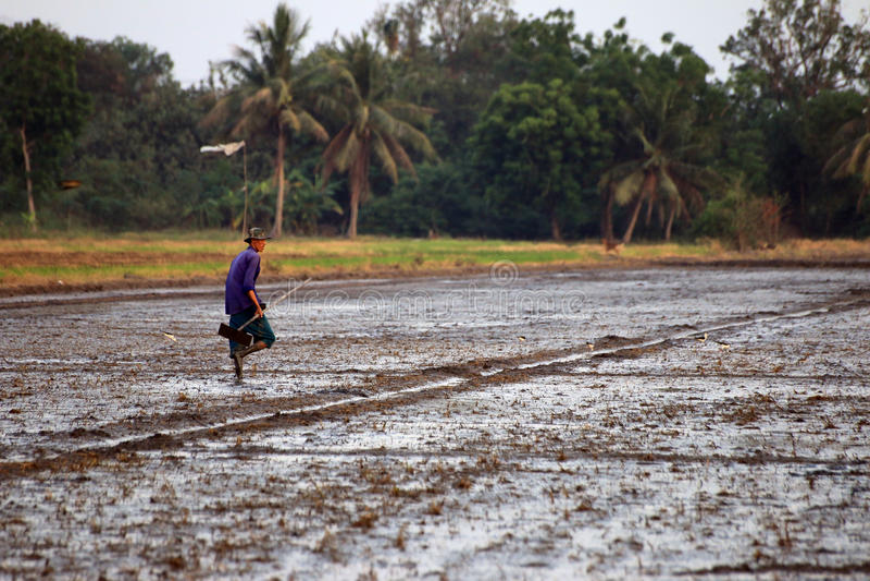 Älterer Landwirt, der auf einem Gebiet macht lizenzfreie stockfotos