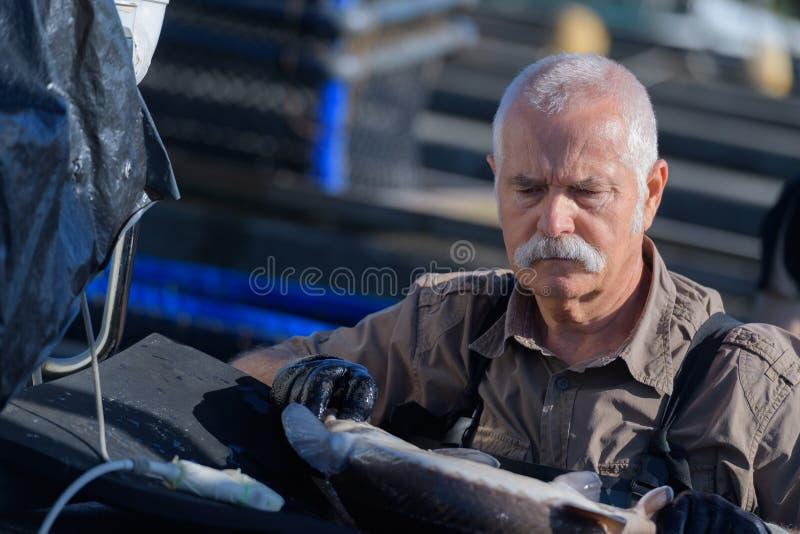 Älterer Mann baut Gewächshaus zusammen stockfoto
