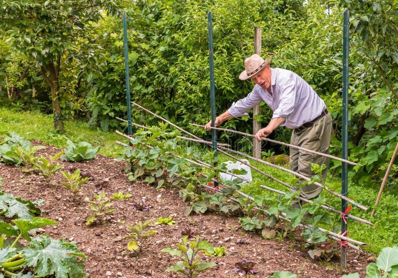 Älterer Mann, der im Garten arbeitet stockfotografie