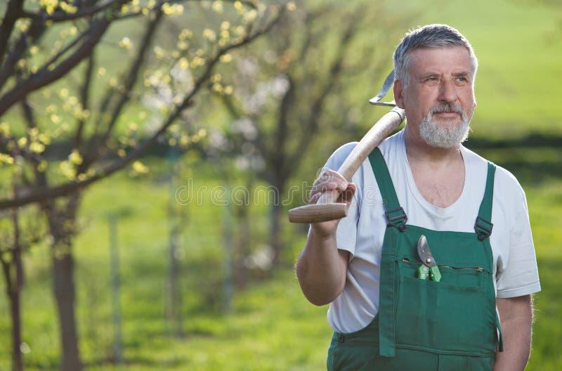 Älterer Mann, der in seinem Garten im Garten arbeitet lizenzfreies stockfoto