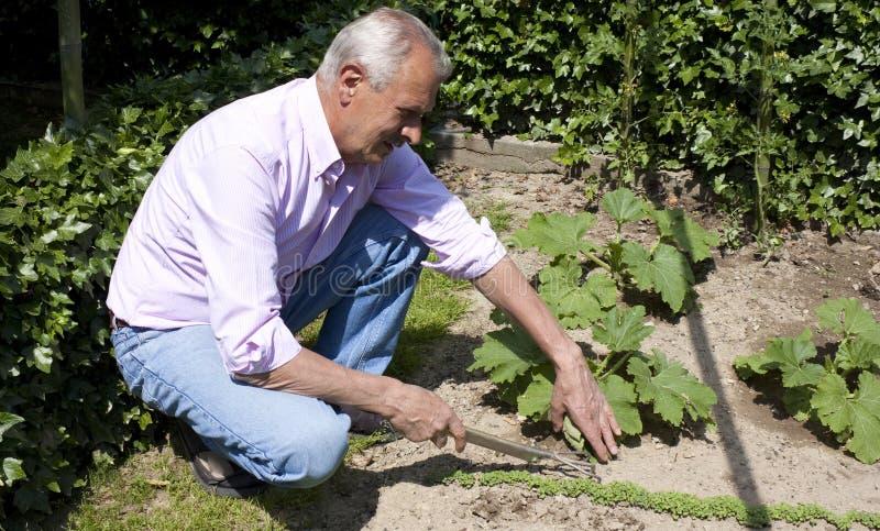 Älterer Mann-Gartenarbeit stockbilder
