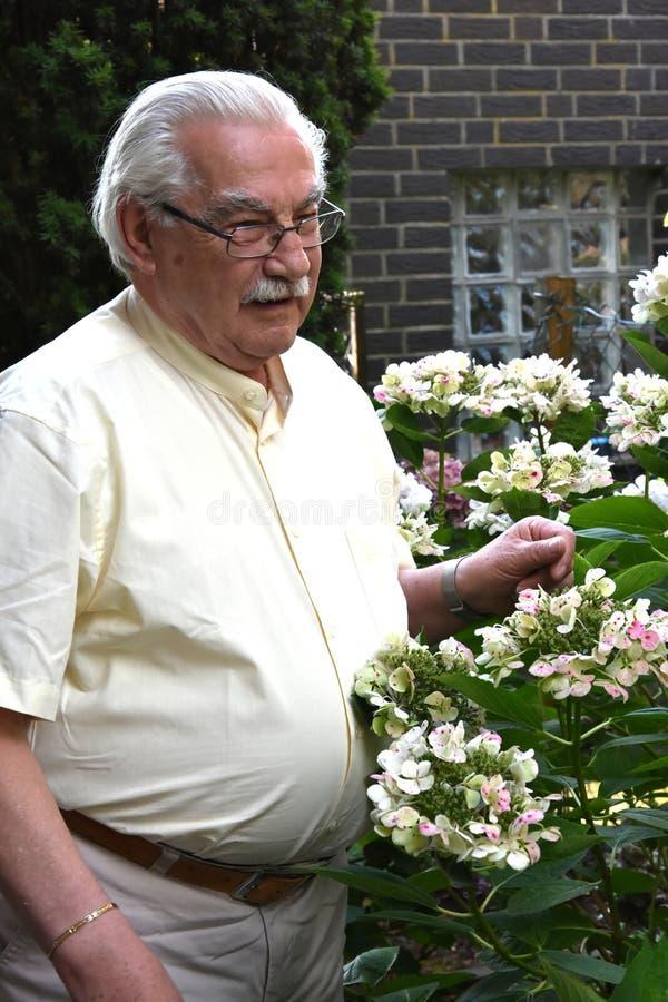 Älterer Mann mit blühender Hortensie lizenzfreie stockfotos