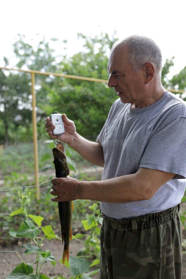 Älterer Mann wiegt Spieß auf Skalen lizenzfreies stockfoto