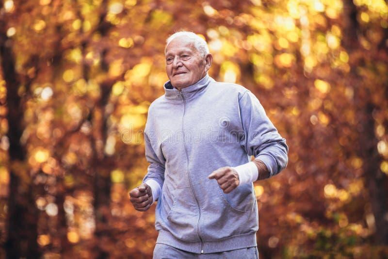 Älterer sportlicher Mann, der in Wald während der Morgengymnastik läuft lizenzfreie stockfotos
