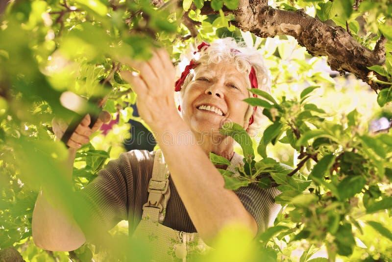 Älterer weiblicher Gärtner, der in ihrem Bauernhoflächeln arbeitet lizenzfreie stockfotografie