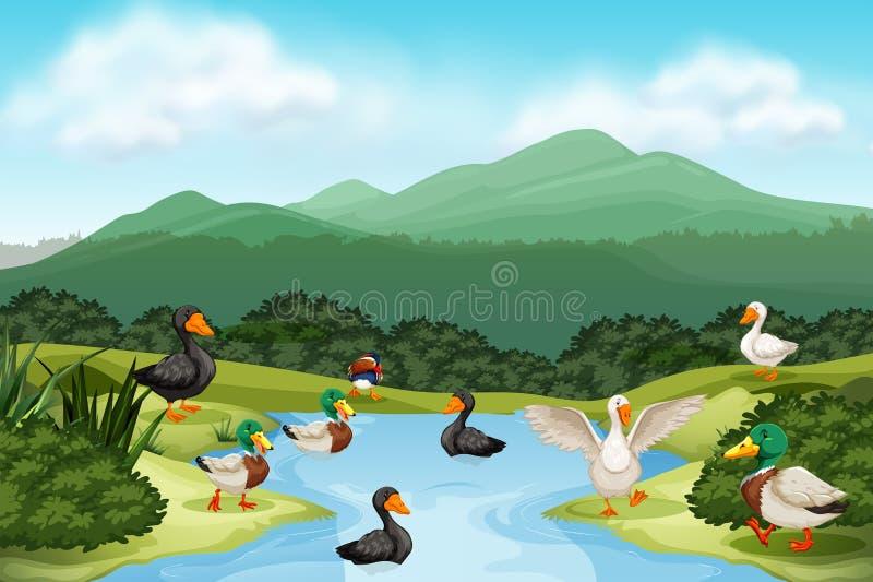 Änder i dammplats stock illustrationer