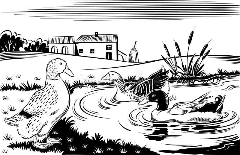 Änder i ett damm stock illustrationer