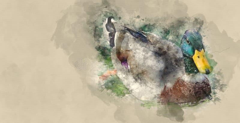 Änder som simmar på ett damm royaltyfri illustrationer