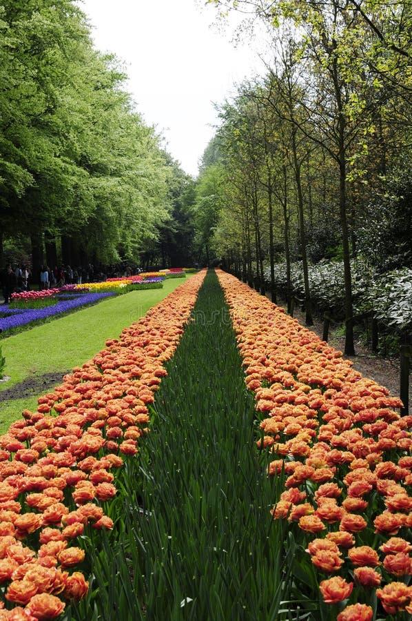 Ändlös blommaväg med tulpan royaltyfria bilder