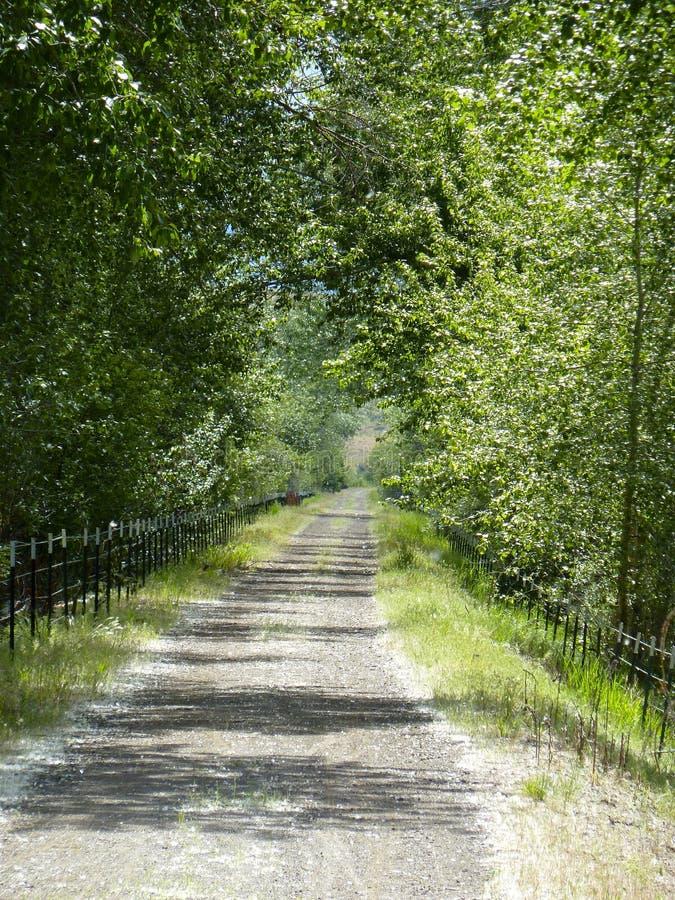 Ändlös grusväg som gränsas av träd royaltyfri bild
