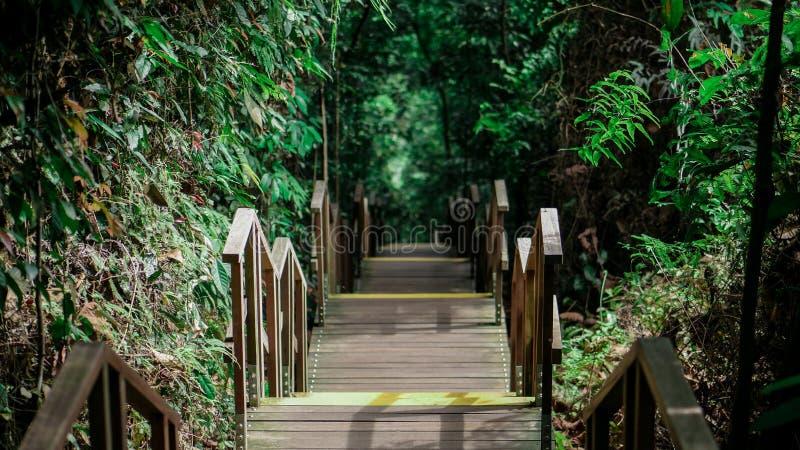 Ändlös trätrappuppgång i den Singapore djungeln royaltyfria foton