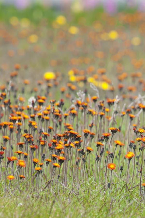 Ändlösa små blommor - tapeter royaltyfri bild