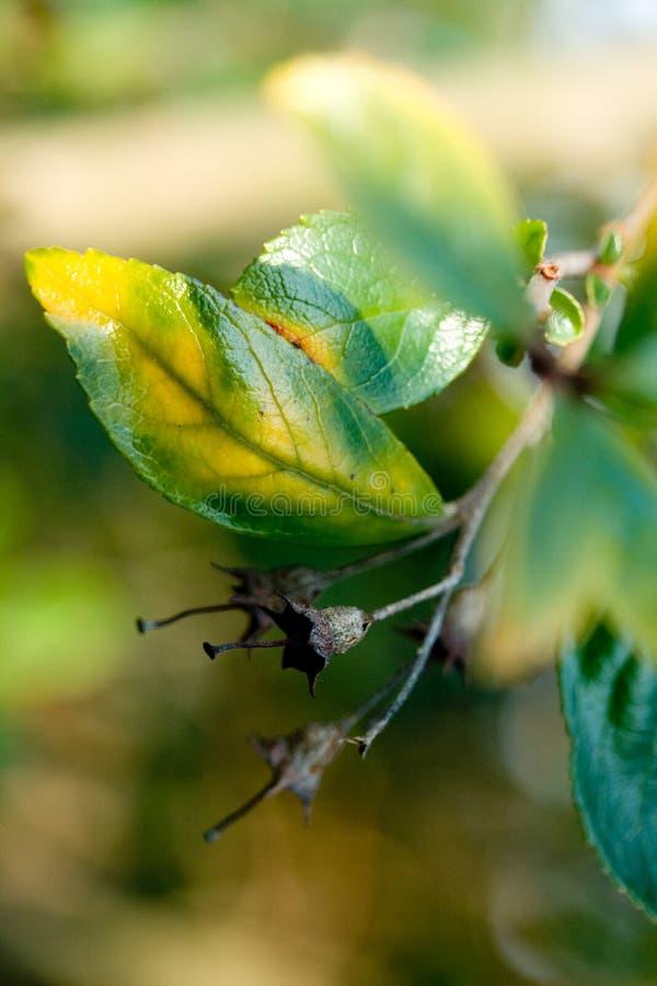 ändrande leaves arkivbild